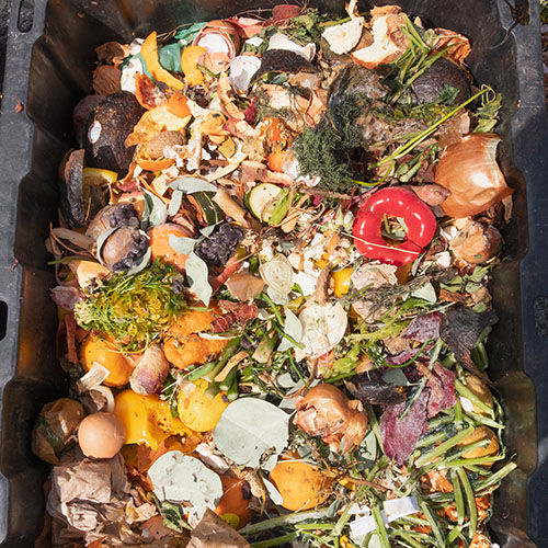 Restaurant food waste in a bin.